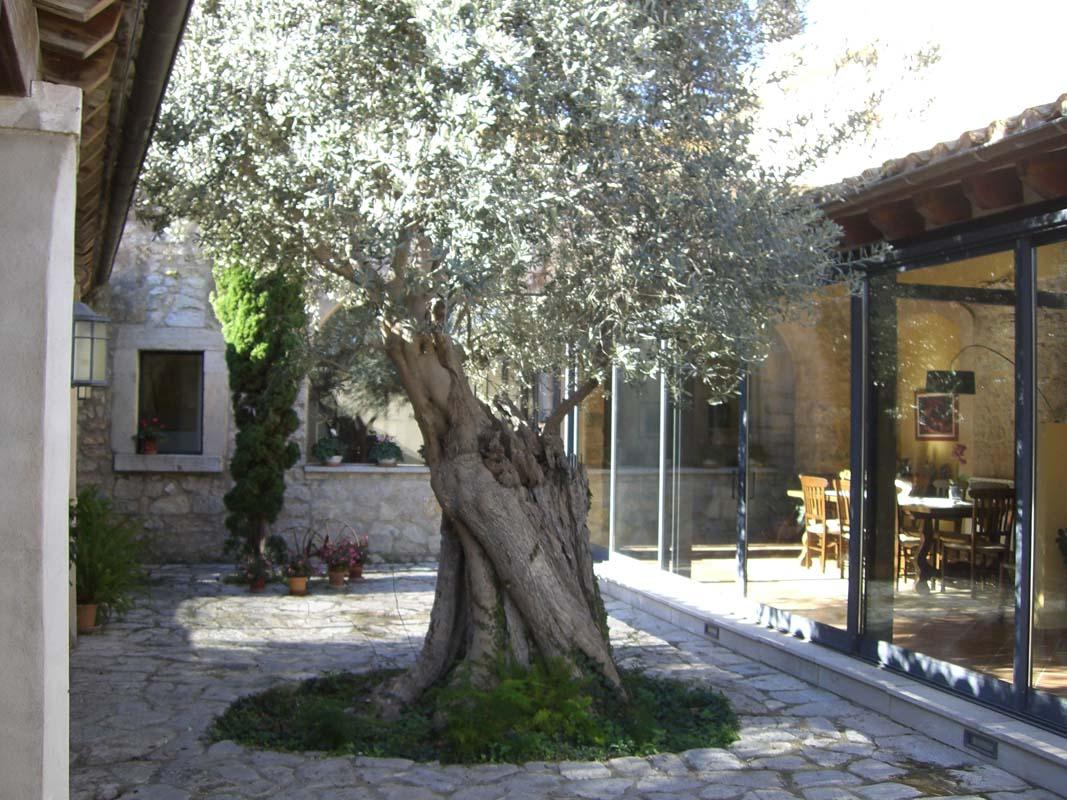 Diseño y construcción de jardín privado en Binissalem (2)